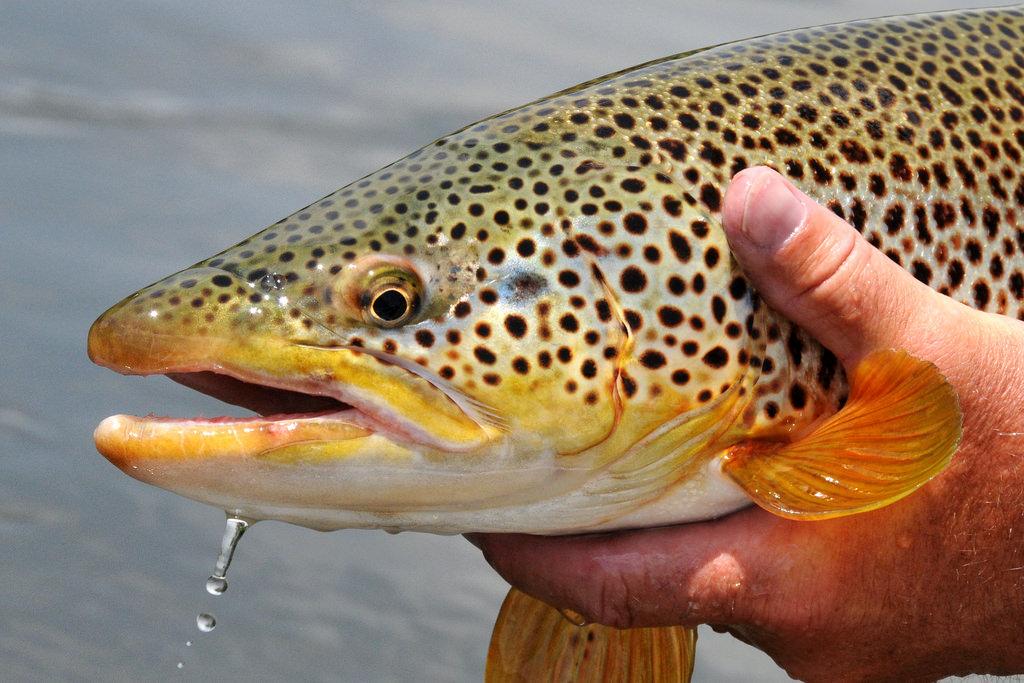 Fishing in Blue Ridge, GA | Georgia Mtn Cabins
